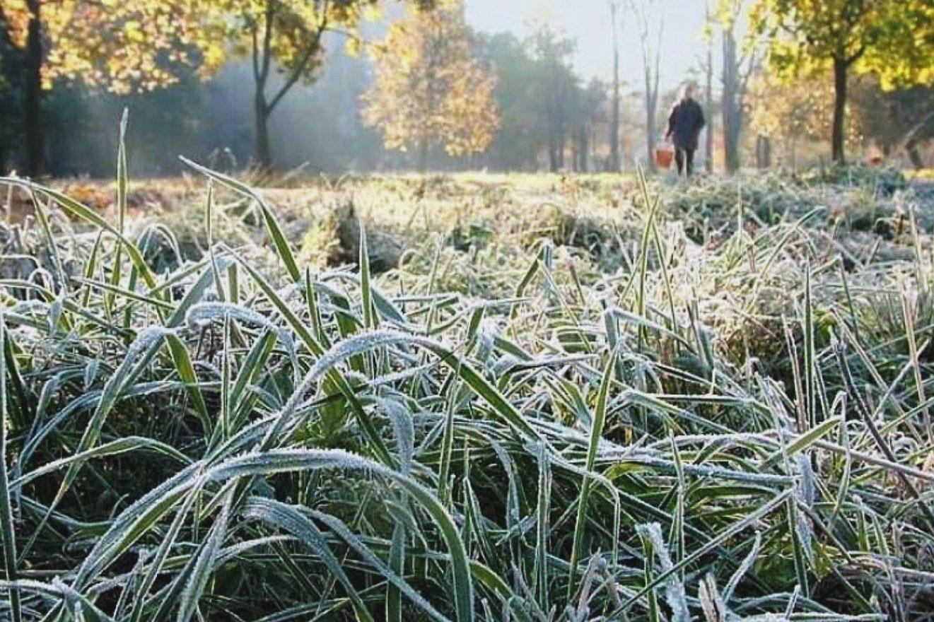 Синоптики предупреждают костромичей о ночных заморозках