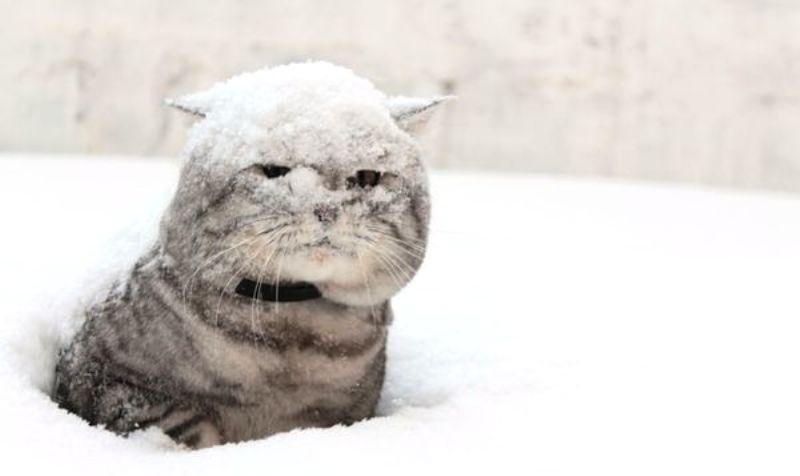 К концу недели Кострому засыплет снегом