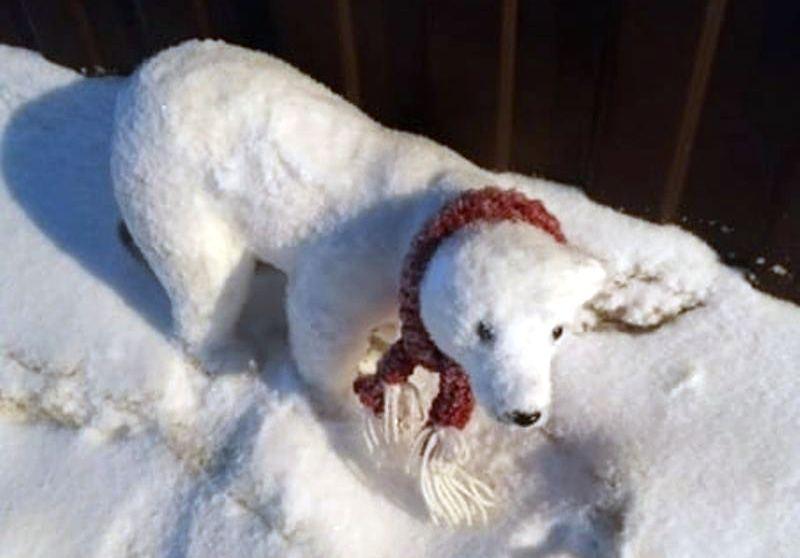 Костромичи опасаются за судьбу белого медвежонка на улице