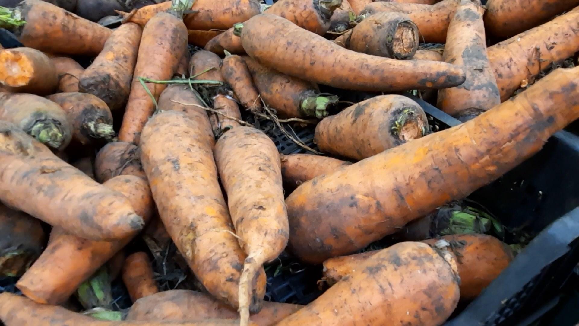 Морковь в Костроме стала стоить дороже арбузов
