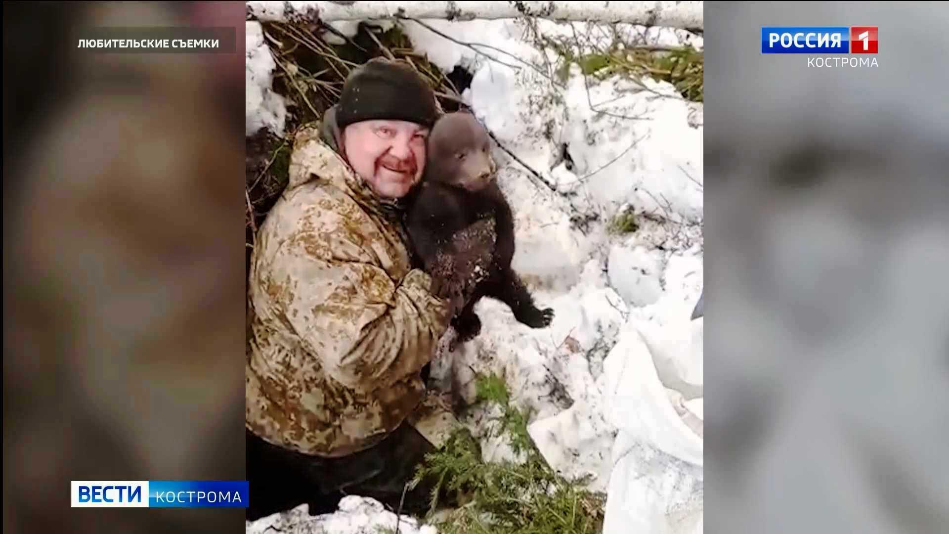Трёх брошенных в лесу медвежат спасли жители Костромской области