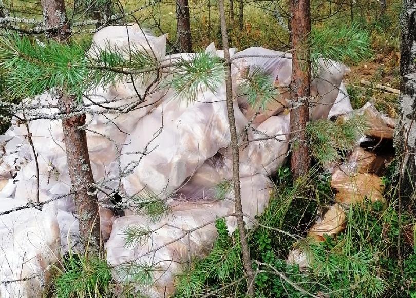В лесу под Костромой обнаружили залежи хлеба