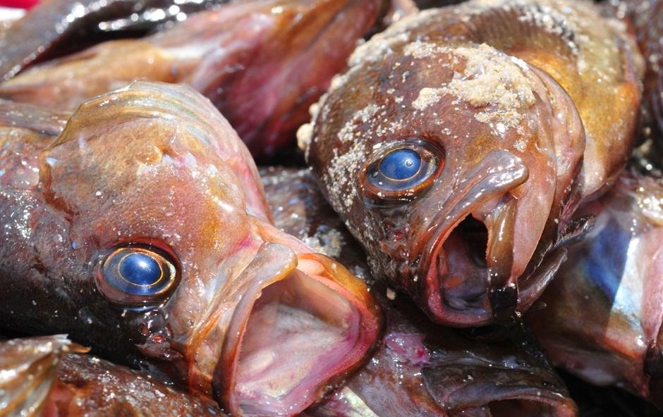 Жители Костромской области могут долго жаловаться на плохие рыбу и мясо