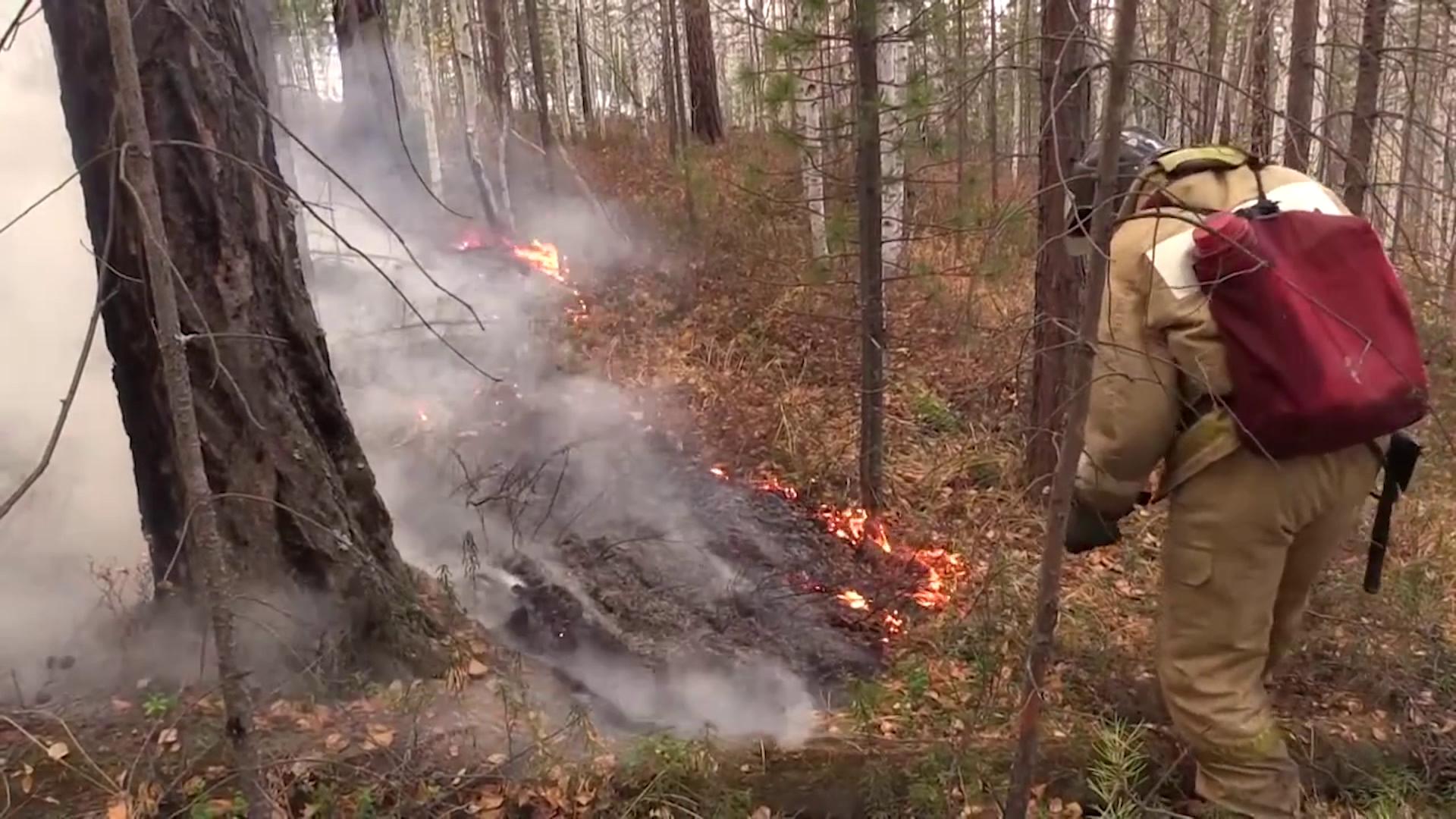 Шестеро суток костромичи боролись с пожаром в Тимошинском лесничестве
