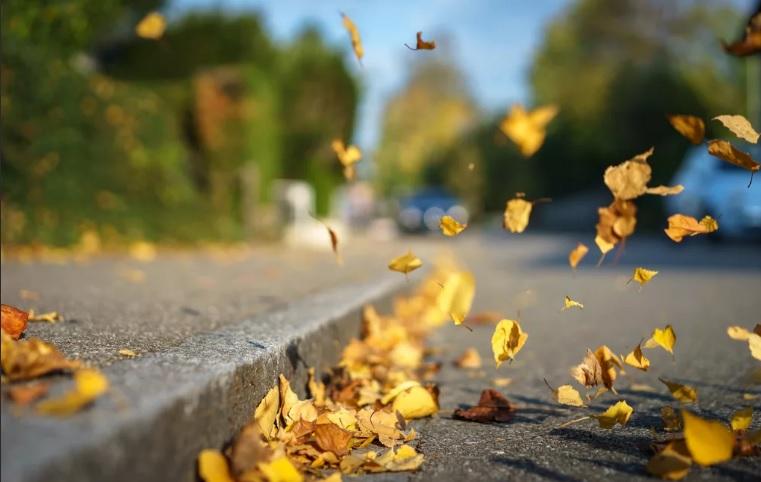 Метеопредупреждение: сильный ветер ожидается в Костромской области