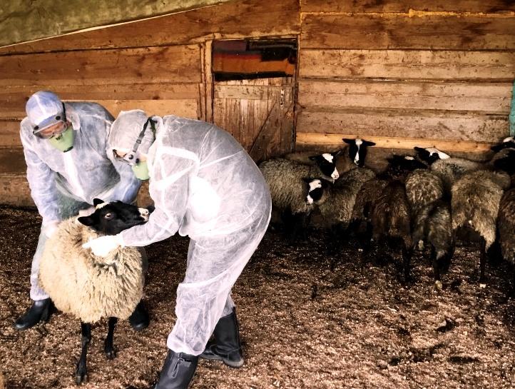 Сергей Ситников подписал постановление о введении ограничений из-за вспышки оспы овец