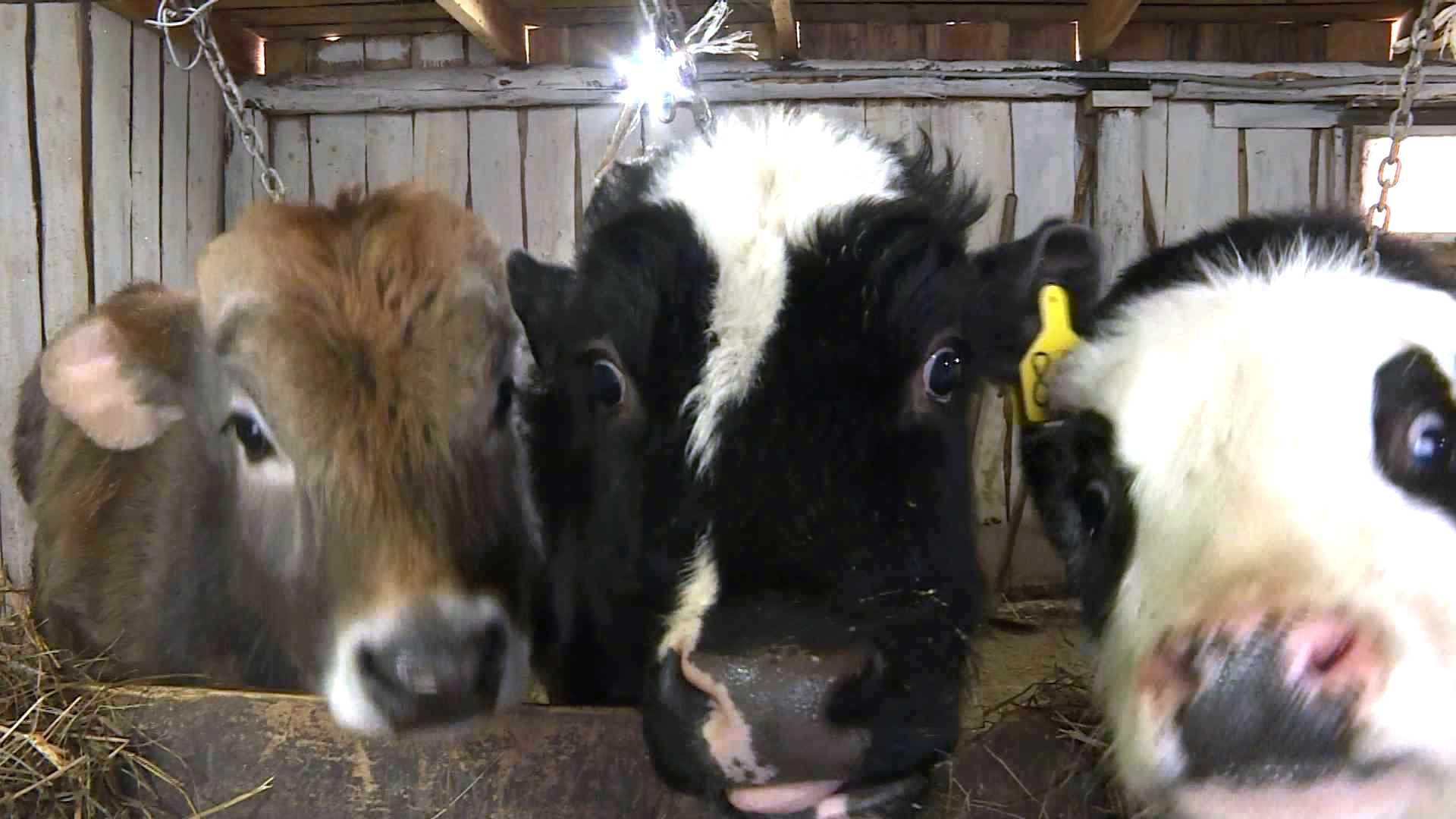 В Костромской области приостановлена продажа некачественных лекарств для животных