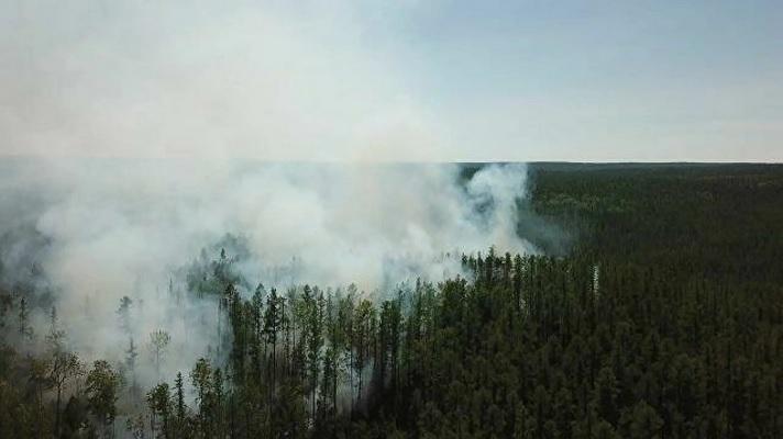 Костромские лесничие сообщают о новом лесном пожаре