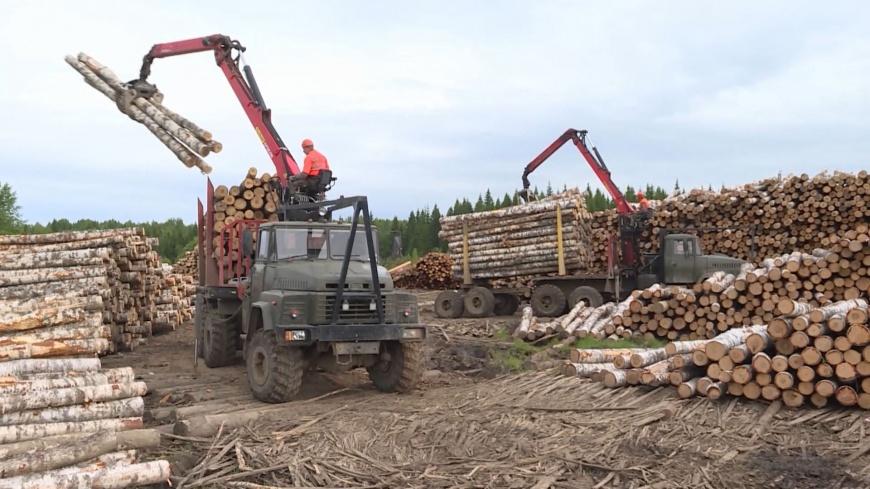 Казна пополнилась за счет костромского леса почти на миллиард