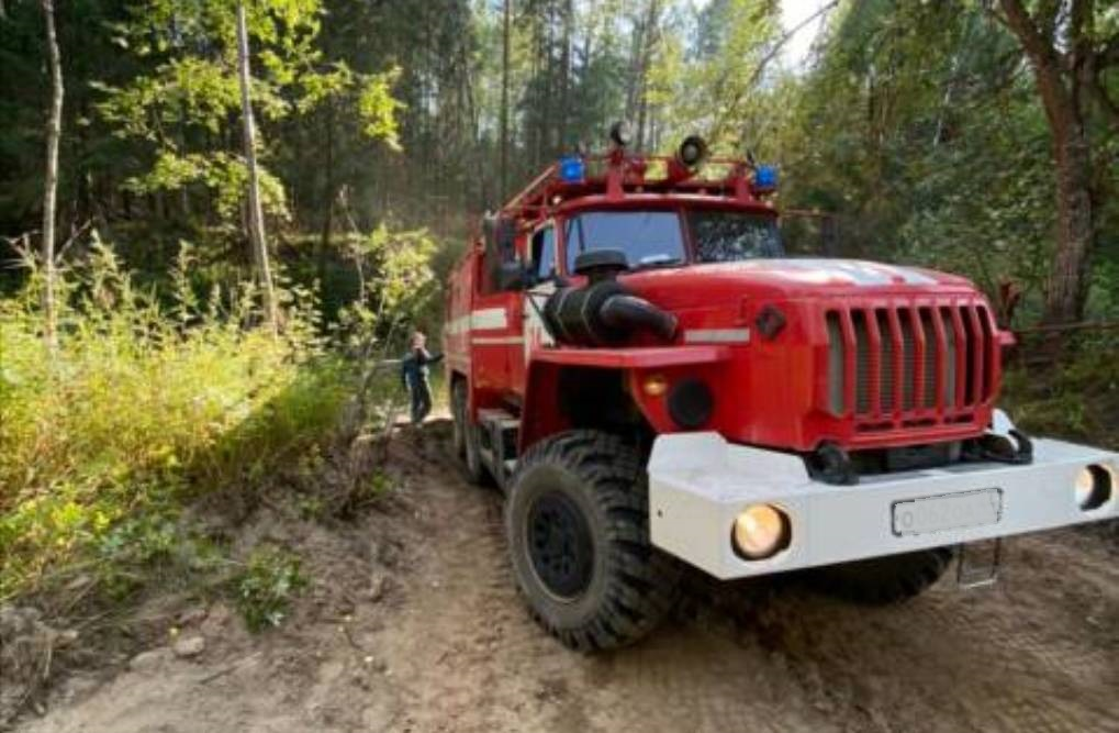 Площадь лесного пожара в Кологривском районе сократили до 100 гектаров