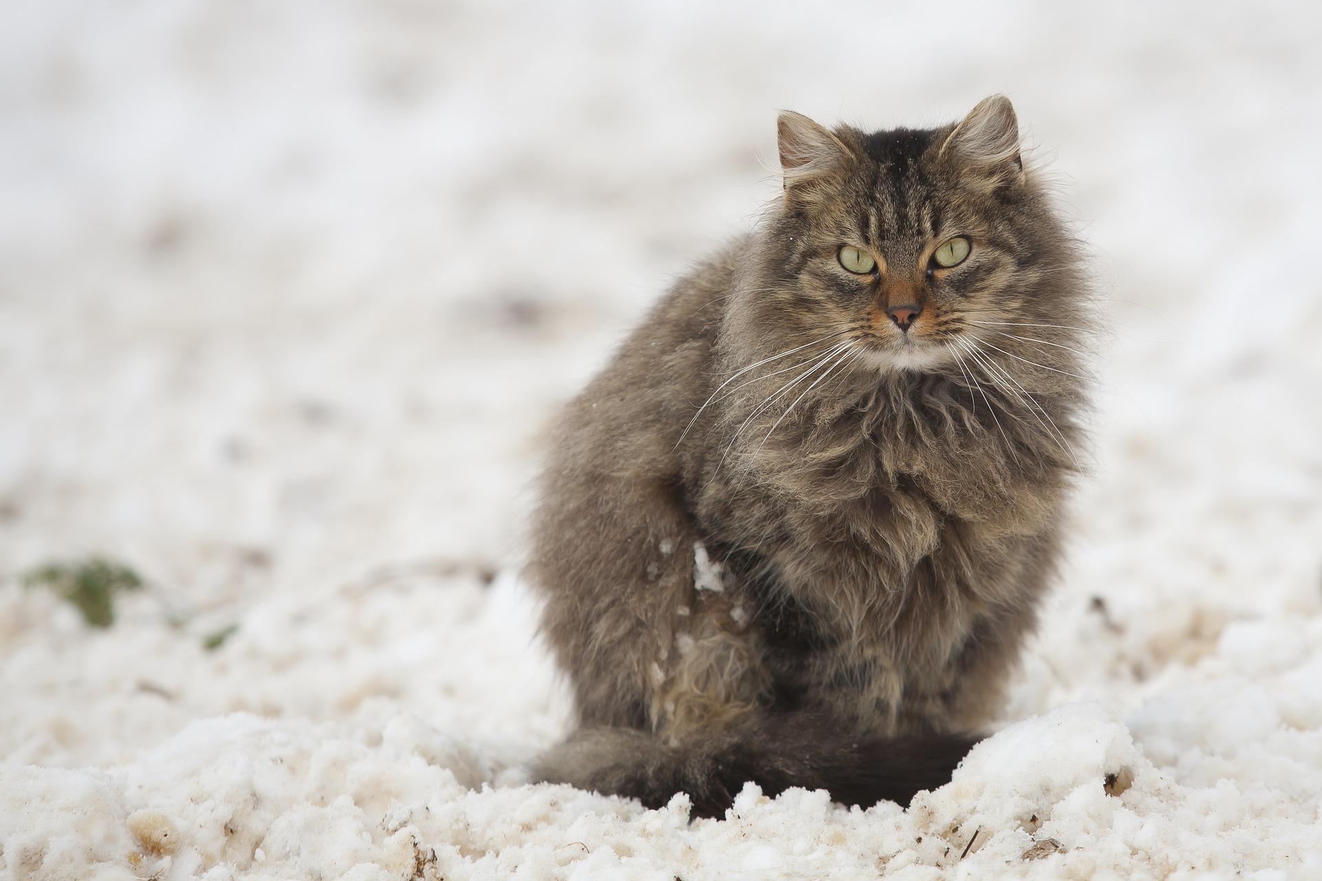 Холод неспешно наступает на Кострому