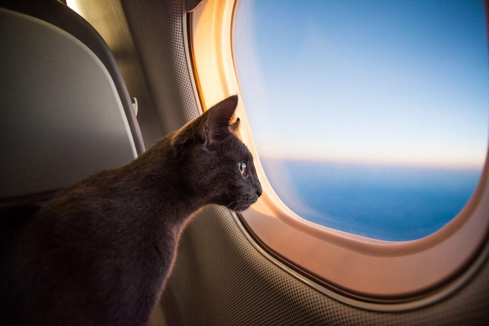 Костромские ветеринары разрешили коту выезд за границу