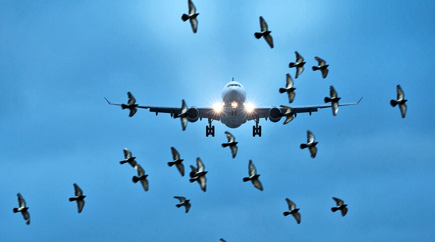 Прокуратура предписала распугать птиц вблизи костромского аэродрома