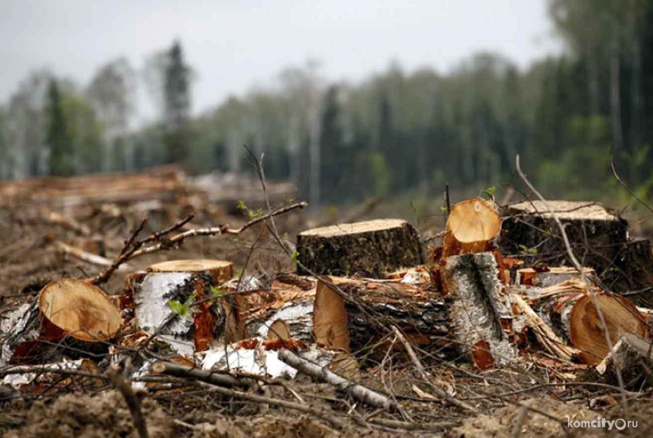 Костромской лесничий злоупотребил своим положением в лесу