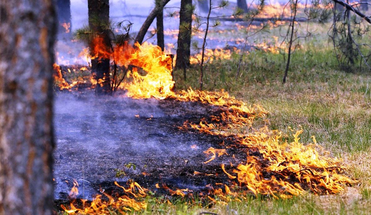 Из-за жары в Костромской области прогнозируется максимальный класс пожароопасности