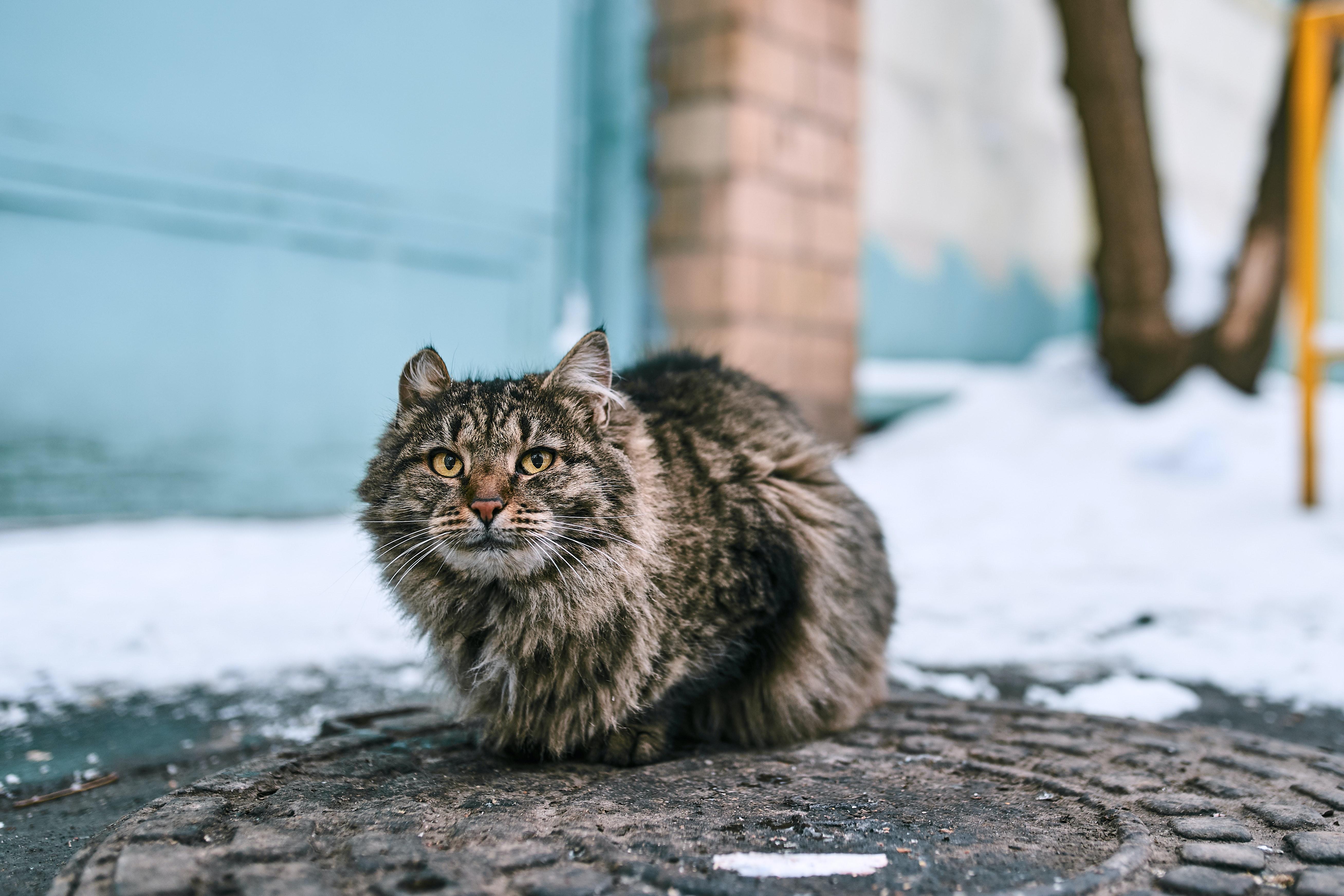 Погода в Костроме: минус становится ближе