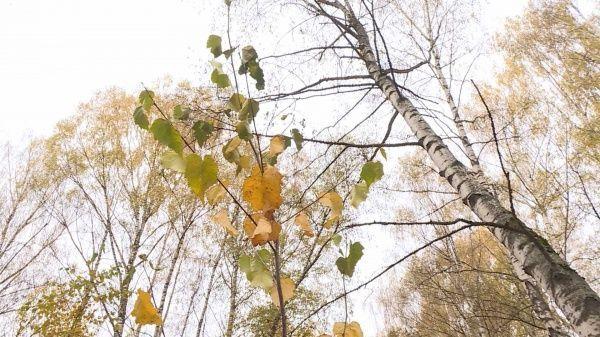 Берёзовую рощу в Костроме пополнили 50 молодых саженцев
