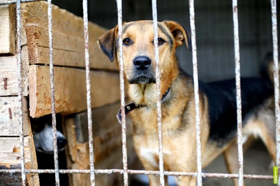 Костромские депутаты законодательно заступились за кошек и собак