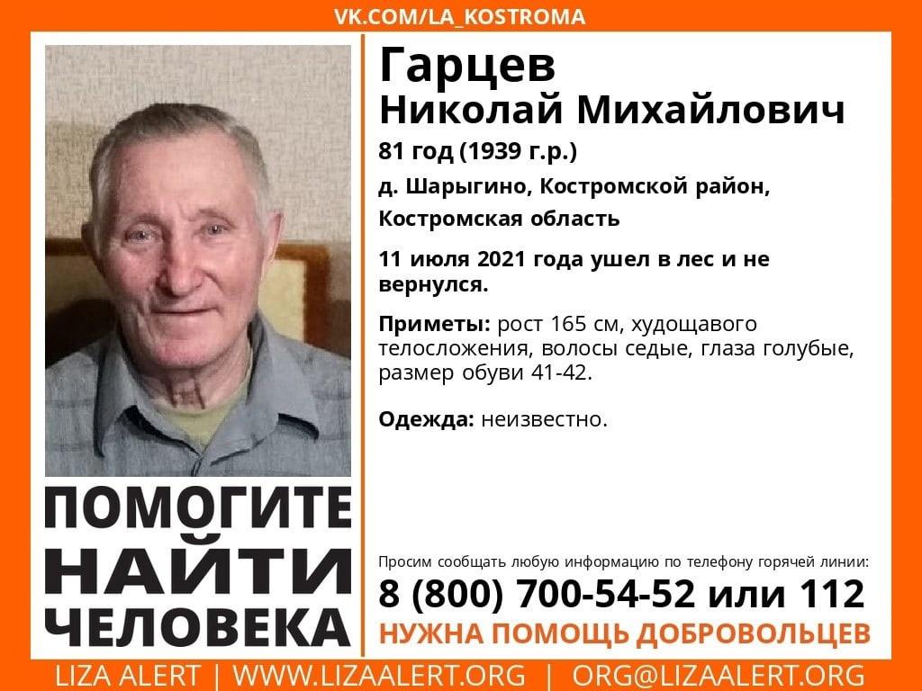 В лесу под Костромой ищут пожилого мужчину