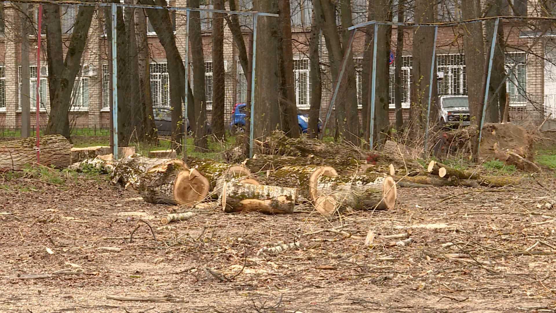 На месте срубленных деревьев в Костроме «вырастут» четыре волейбольные площадки