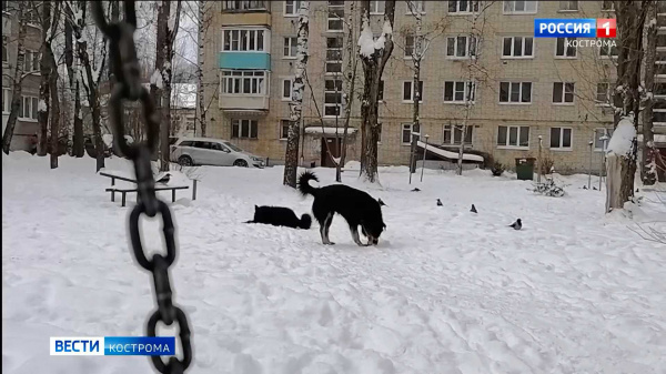 Двор в костромском микрорайоне захватили бродячие собаки