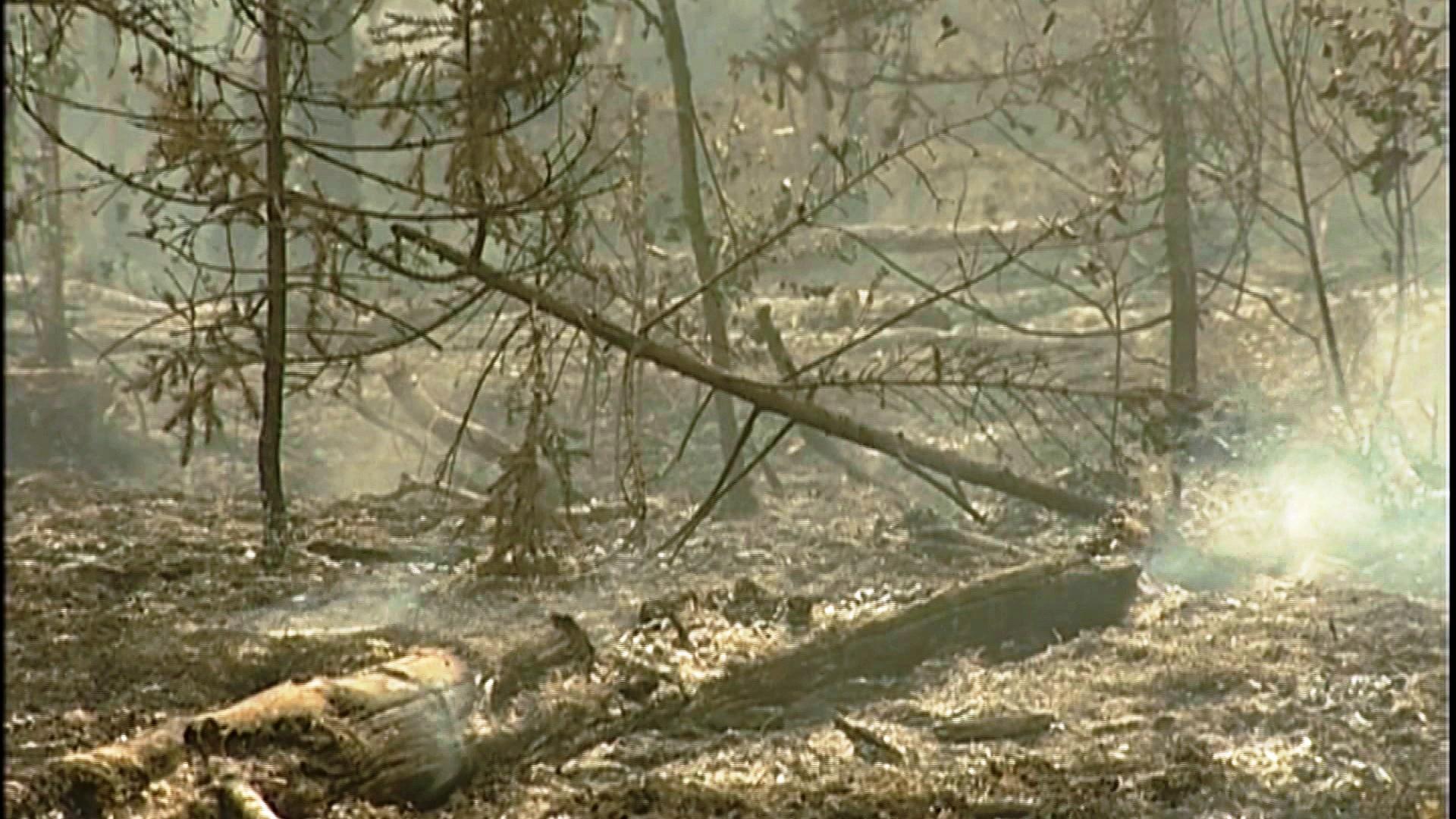 Больше 60 гектаров лесов потушили за сутки в Костромской области