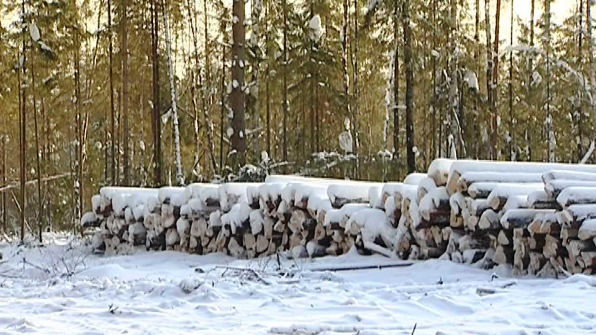 Недоплаченные за костромской лес миллионы вернулись в казну