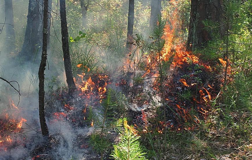 Спасатели потушили лесной пожар в Парфеньевском районе