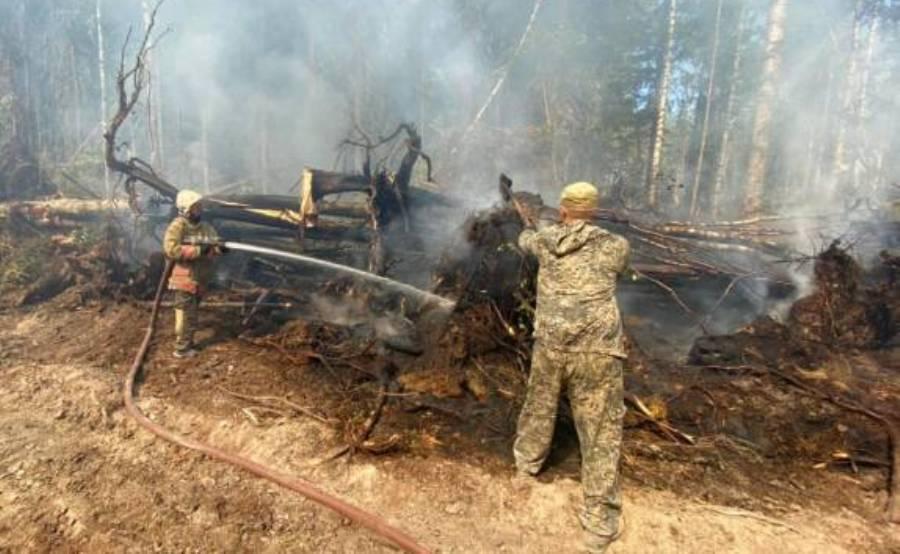 Огонь в кологривских лесах Костромской области взяли в кольцо
