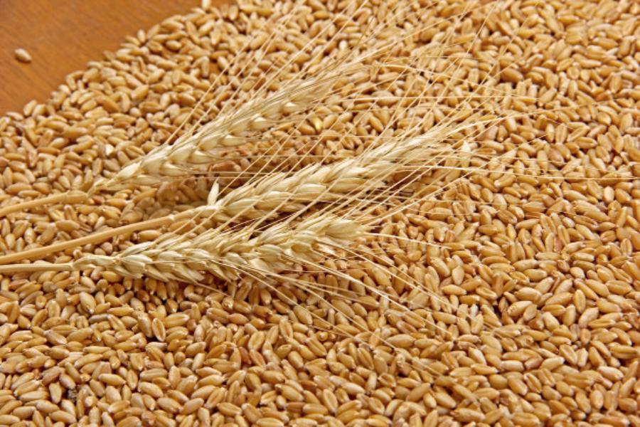 Две иноземных фирмы оштрафованы за поставку костромичам нелегального зерна