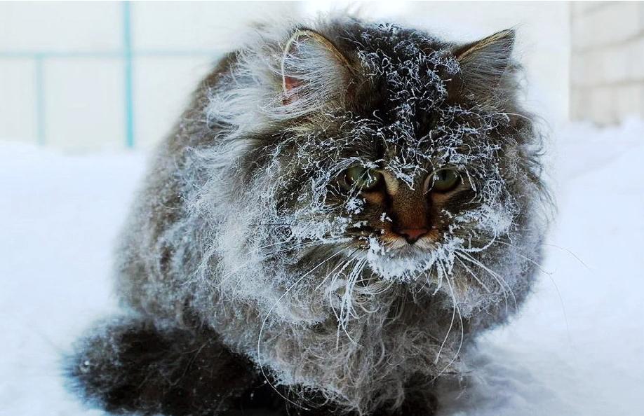 Суровые морозы накроют Кострому на 23 февраля
