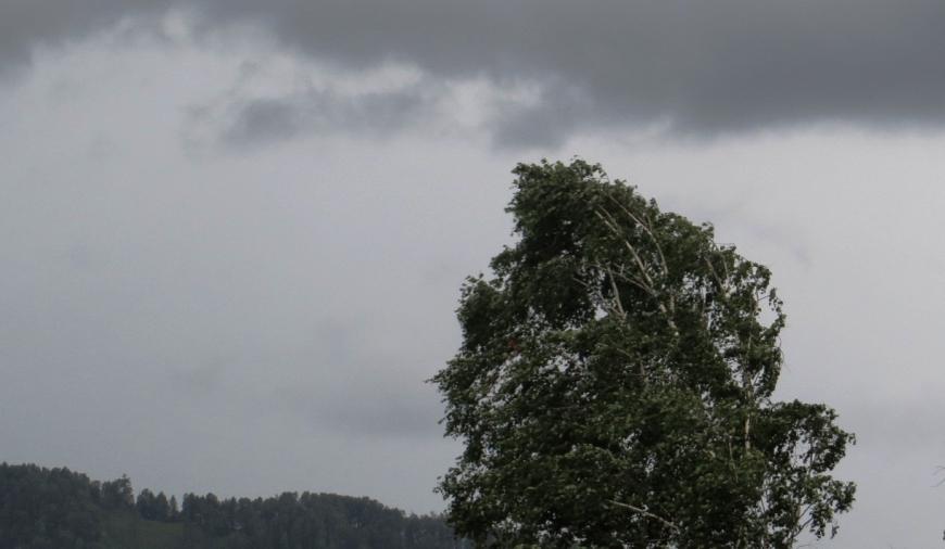 Грозы и сильный ветер ожидаются в Костромской области