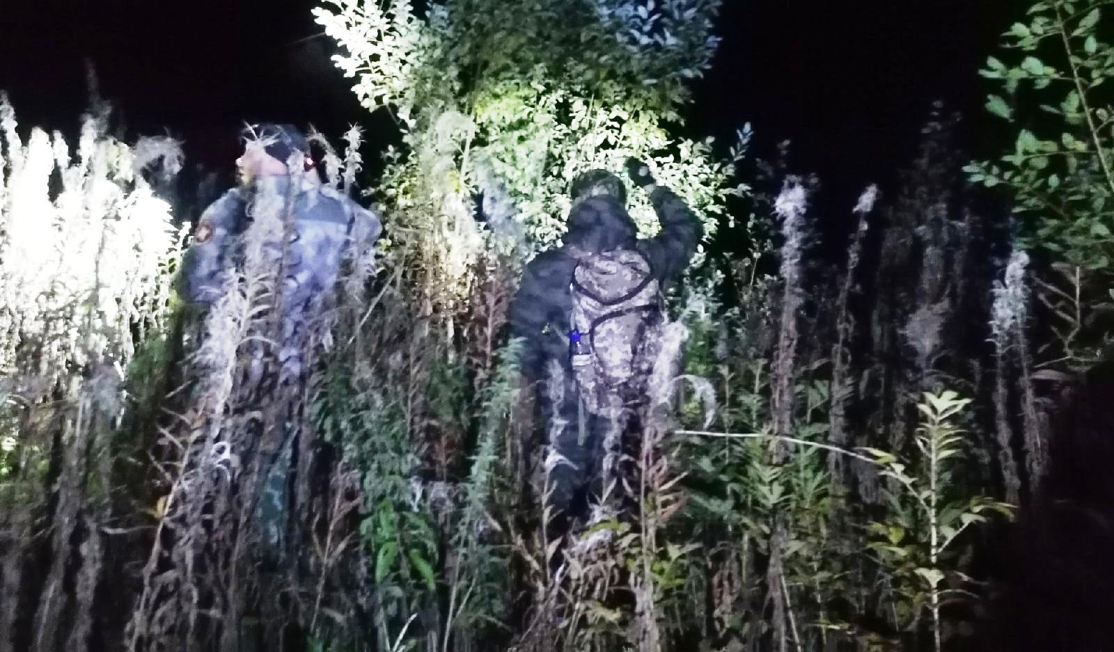 Пропавшего 82-летнего дедушку нашли в костромском лесу спустя три дня