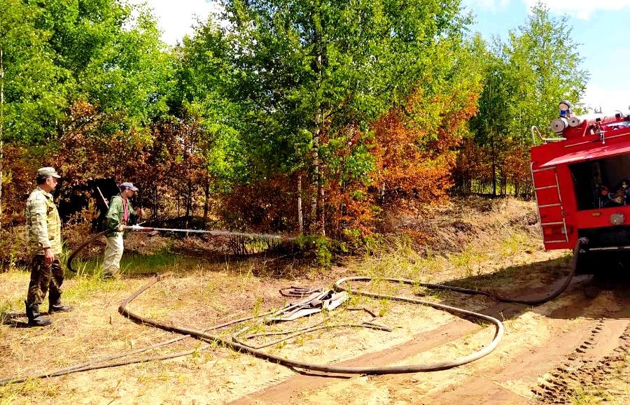 Лесничие оперативно справились с пожаром в Парфеньевском лесу