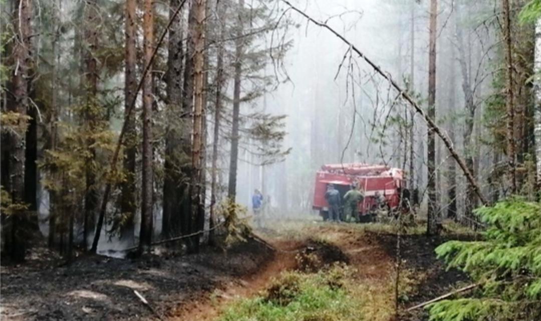 Лесной пожар в Костромской области потушили на площади почти в 20 га