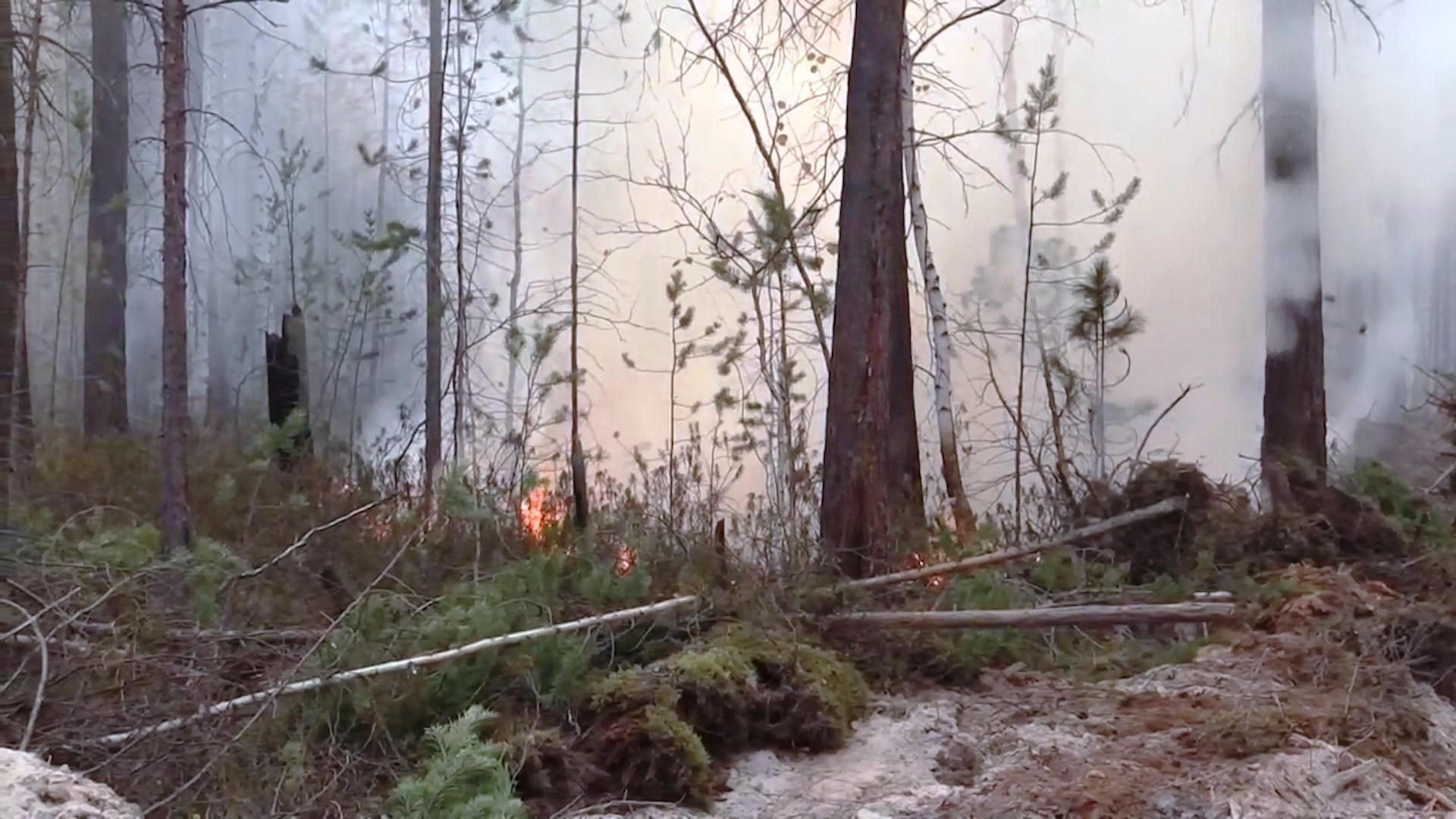 Площадь лесного пожара в Кологривском районе достигла 660 гектаров