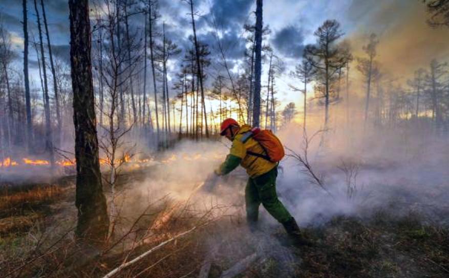 Отличившиеся на тушении лесного пожара костромичи получат награды