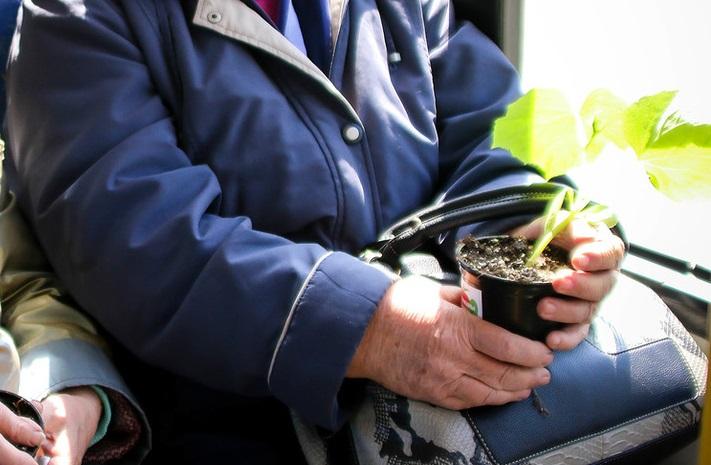 Для садоводов Костромы создали новый автобусный маршрут