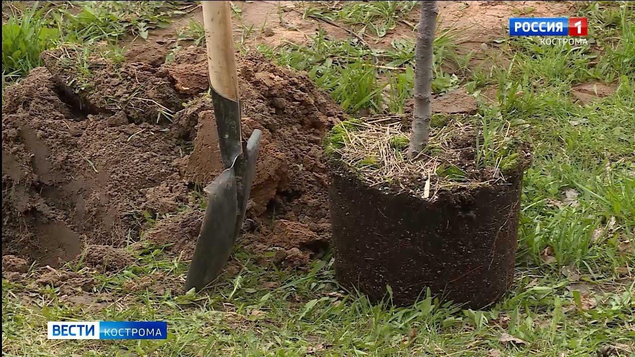 В память о павших бойцах в костромском Парке Победы посадили деревья рябины