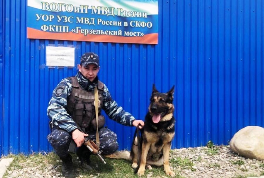 Полицейская Белка из Костромы унюхала кокаин в машине