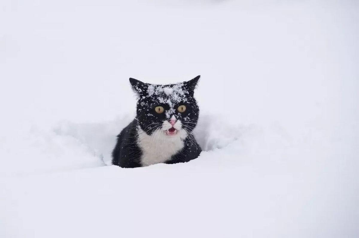 Суровый февраль основательно приморозит Кострому