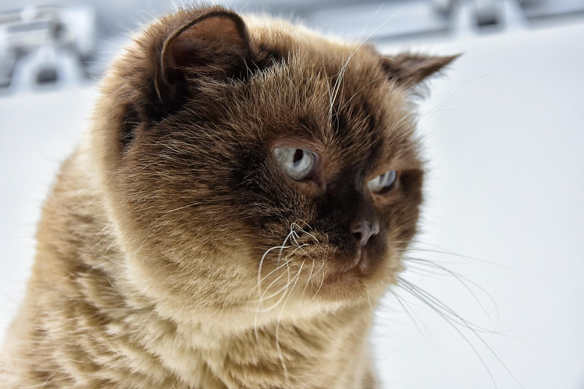 Морозы в Костроме продолжат крепчать