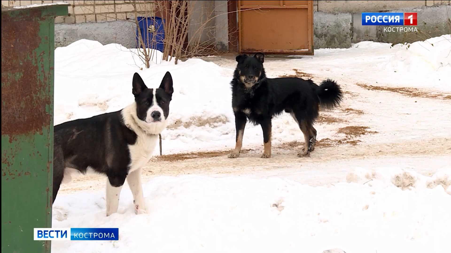 Троих жителей костромского микрорайона Якиманиха покусали бродячие собаки