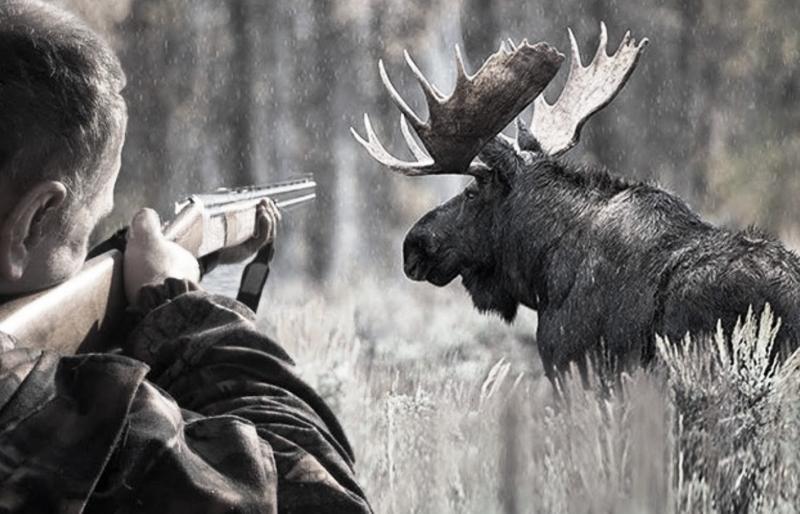 Задержанные за браконьерство костромичи не признались в убийстве лося