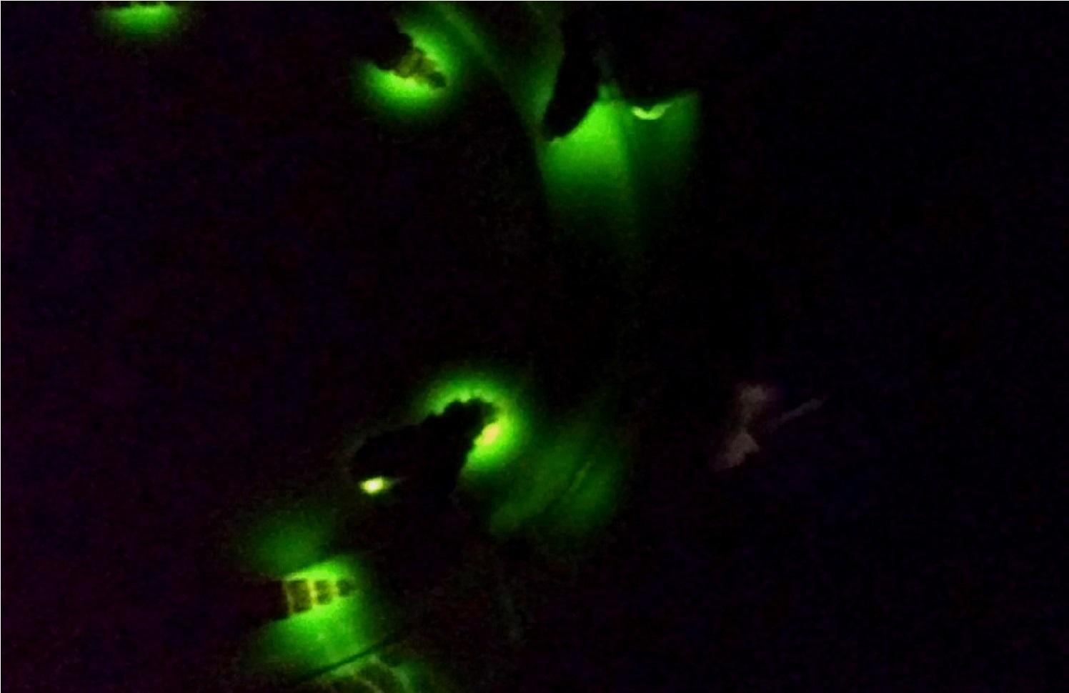 Дачники запечатлели под Костромой редких светлячков