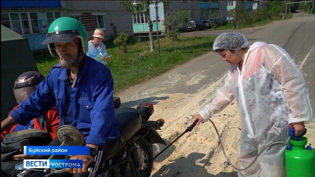 В Костромской области введен карантин из-за вспышки африканской чумы свиней