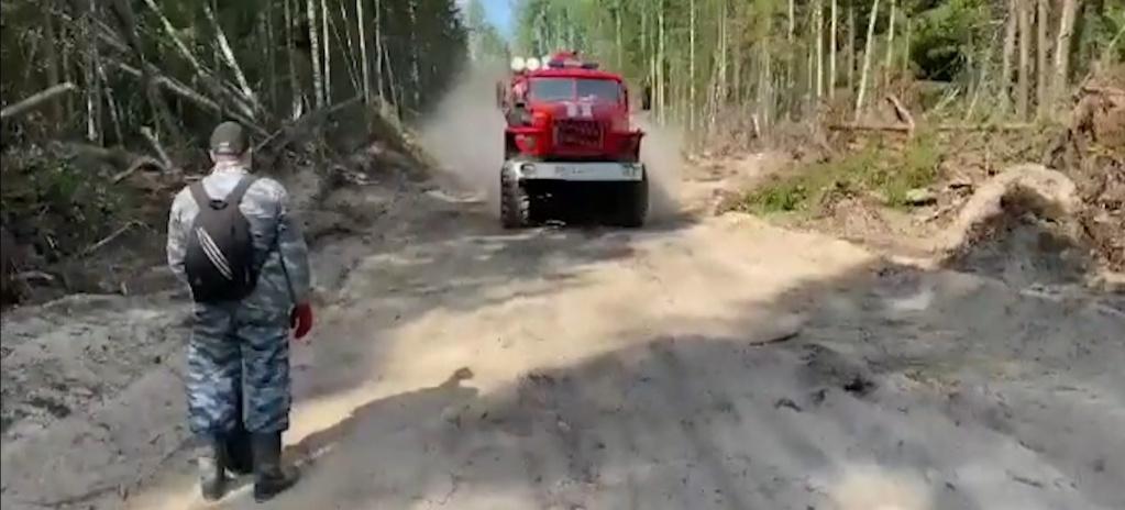 Тушить горящий лес в Кологривском районе мешают падающие деревья