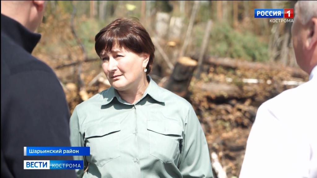 Семь лесных пожаров за полтора месяца потушили в Шарье