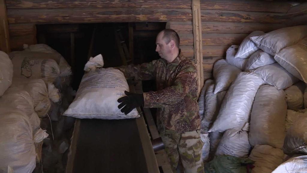 В Костромской области начали работать шишкосушилки